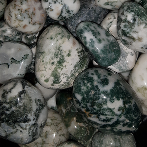 Tree Agate, Tumbled