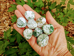 Tree Agate with Information Card | Tumbled Stone | Large | Agate | Crystal | Pocket | Grid | Meditation | Heart Chakra | Strength | Calm
