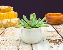 Load image into Gallery viewer, New Home Gift | Home Gift Box | Housewarming Gift | Succulent Gift | Realtor Gift | Real Estate | First Home Gift | Moving Gift | Neighbor