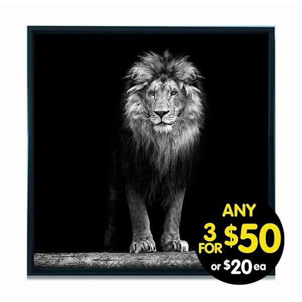 Lion Framed Canvas Print 37X37cm