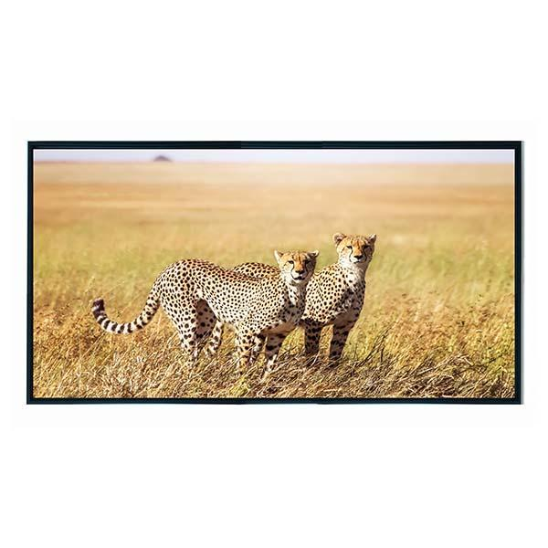 Cheetah Framed Canvas Print 75X40cm