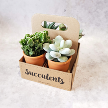 Load image into Gallery viewer, MIXED SUCCULENTS