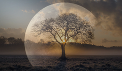 Transparent like moon overlay by a tree in a sunrise landscape