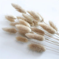 50 Stems Dried Bunny Tail Grass