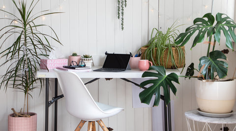 White desk and chair with plants