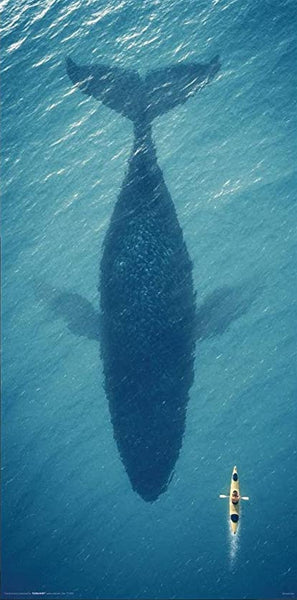 Whale Silhouette