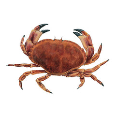 Big Brown Crabs
