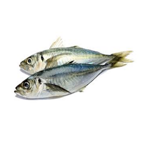 Jack fish or Horse Mackerel