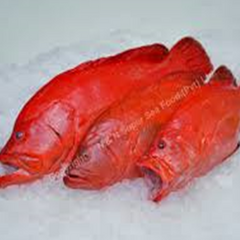 Red Grouper or Butter fish