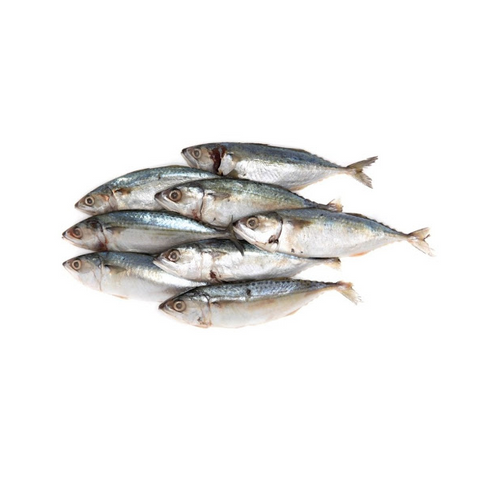 Indian Mackerel 13.99kg