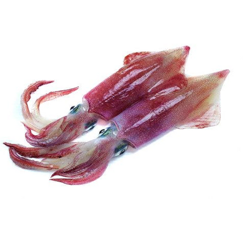 Squid (CALAMARI)