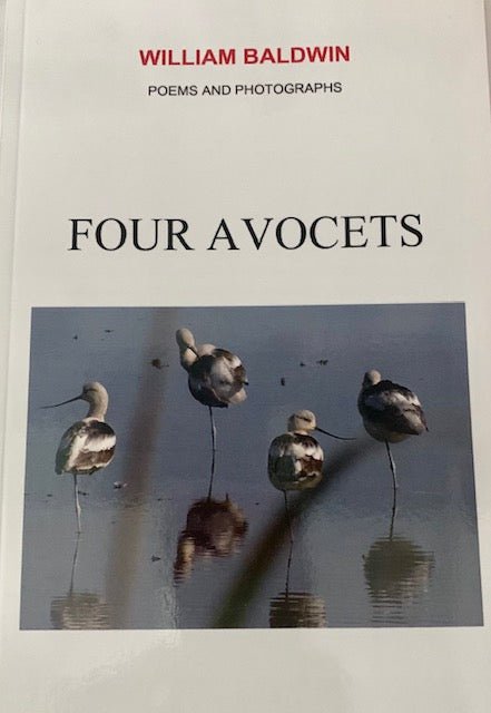 Four Avocets ~ William P. Baldwin
