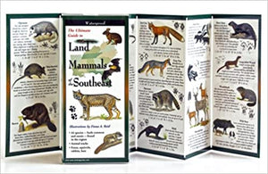 Land Mammal Guide to the Southeast ~ Reid