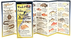 Wreck & Reef Fishes of the South Atlantic Coast ~ Vall Kells