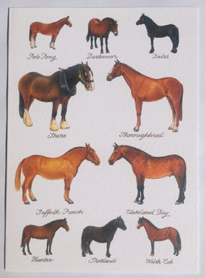 Horse Breeds - The Alresford Gift Shop