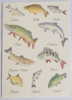 Freshwater Fish - The Alresford Gift Shop