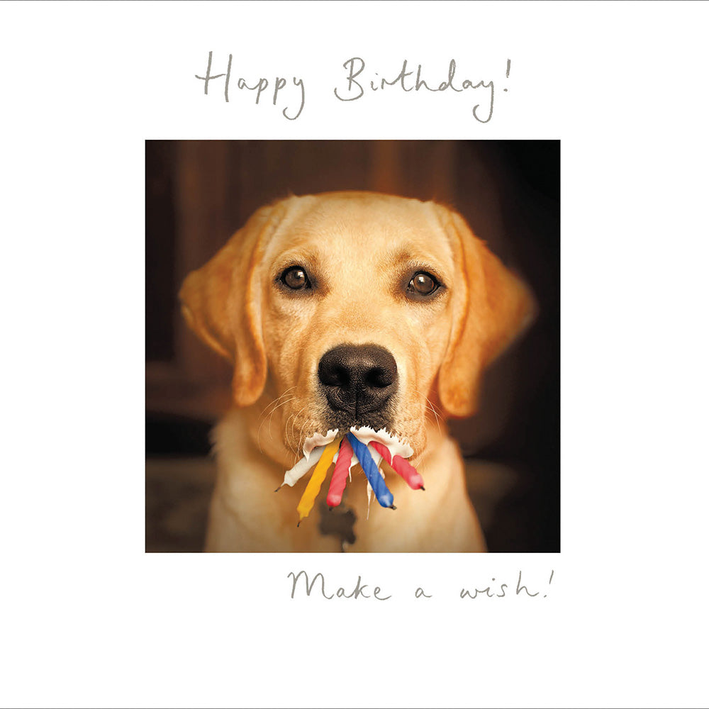 Happy Birthday - Make a wish!!