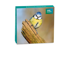 8 Blank cards with envelopes - Blue Tit ( BBC Earth)