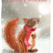 Merry Christmas - Premium Eco cards 10 pack - Red squirrel