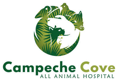 Campeche Cove All Animal Hospital