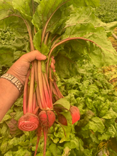 Load image into Gallery viewer, Chioggia Beet