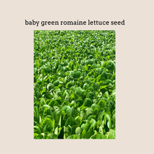 Load image into Gallery viewer, Baby Green Romaine Lettuce Seed