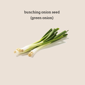 Bunching Onion (Green Onion) Seed