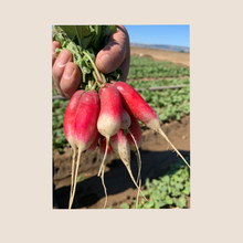 Load image into Gallery viewer, Red French Breakfast Radish Seed