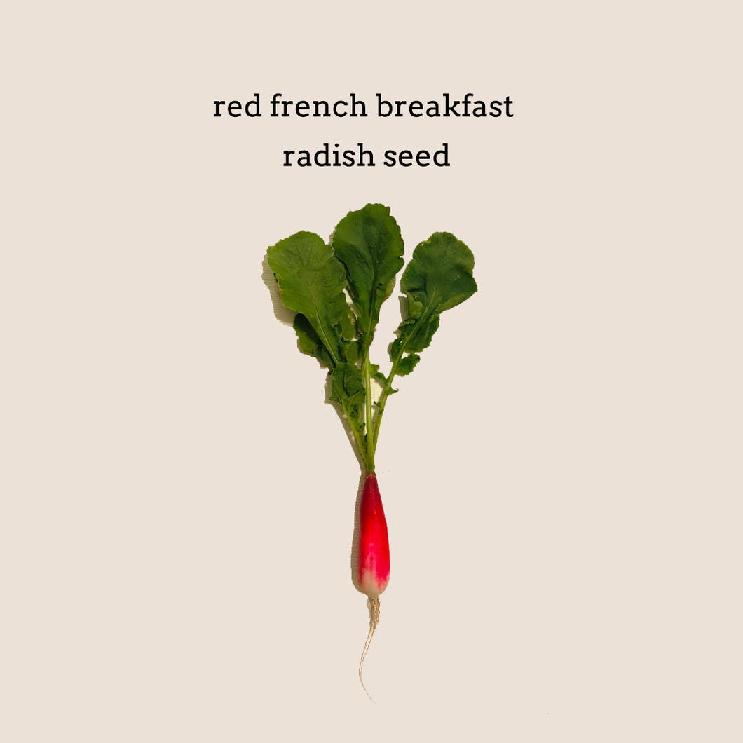 Red French Breakfast Radish Seed