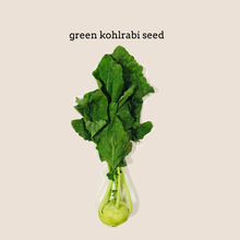 Load image into Gallery viewer, Green Kohlrabi