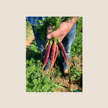 Load image into Gallery viewer, Sunset Carrot Seed