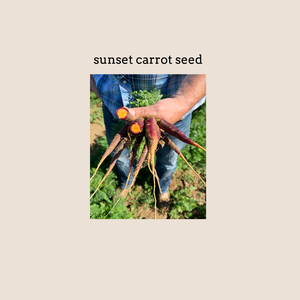 Sunset Carrot Seed