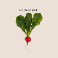 Load image into Gallery viewer, Red Radish