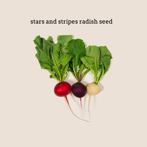 Stars and Stripes Radish Mix