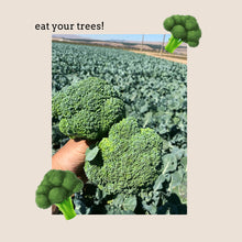 Load image into Gallery viewer, Broccoli Seed