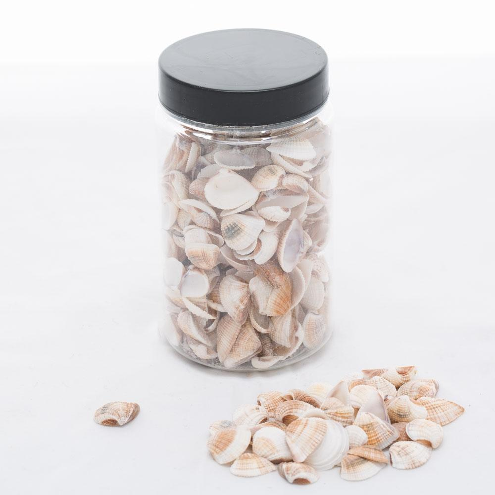 richland seashell vase filler set of 12