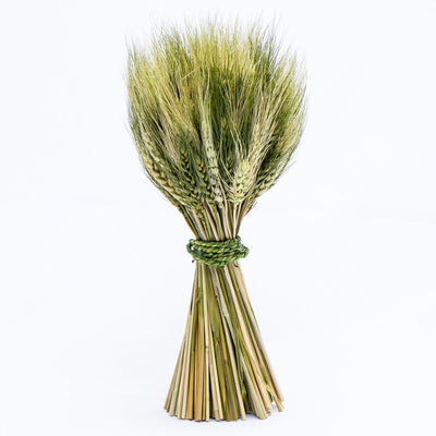 richland preserved stand up wheat bundle set of 16