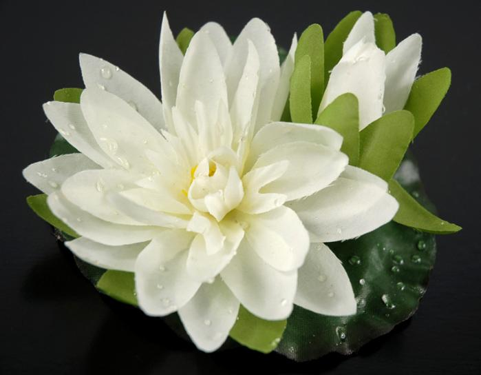 12 Floating Lotus with Water Drops Cream 4 Inch