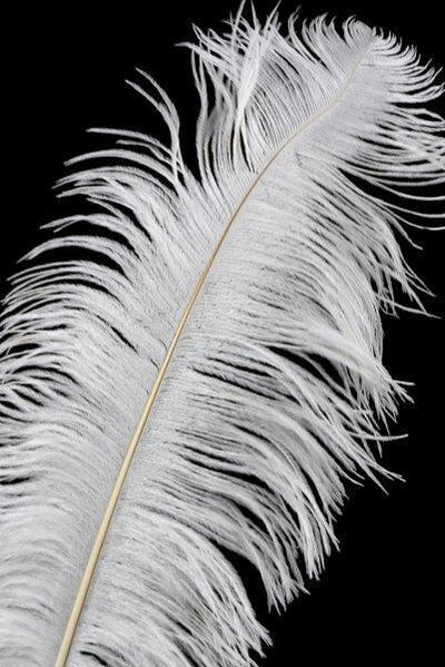 White Ostrich Feathers Drabs 17-20in 1/4lb