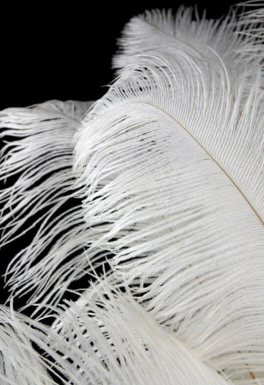 white ostrich feathers drabs 17 20in 1 4lb