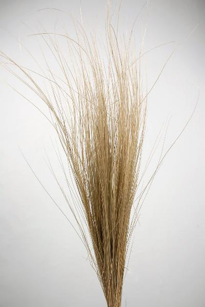 Natural Bright Tall Grass Preserved 35-40 Inch