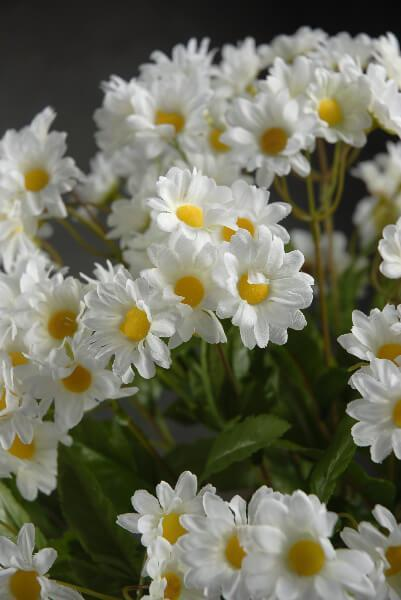 White Daisy Bouquet with 24 Stems