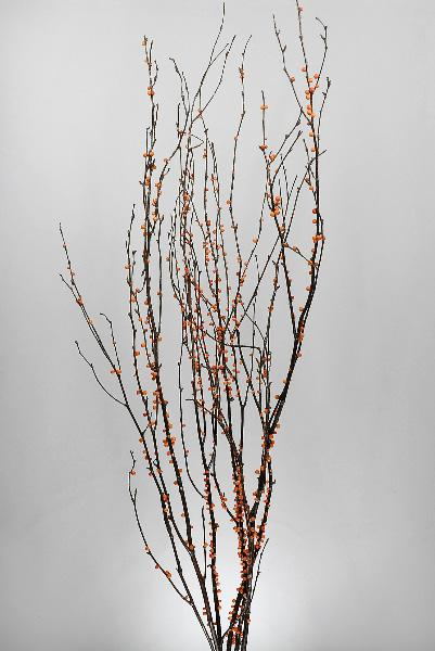 Natural Birch Branches with Faux Bittersweet Berries 3-4ft