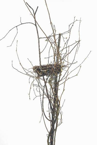 Bird Nest on Natural Branch 24in