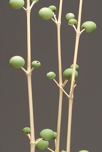3 bamboo berry branches green 42