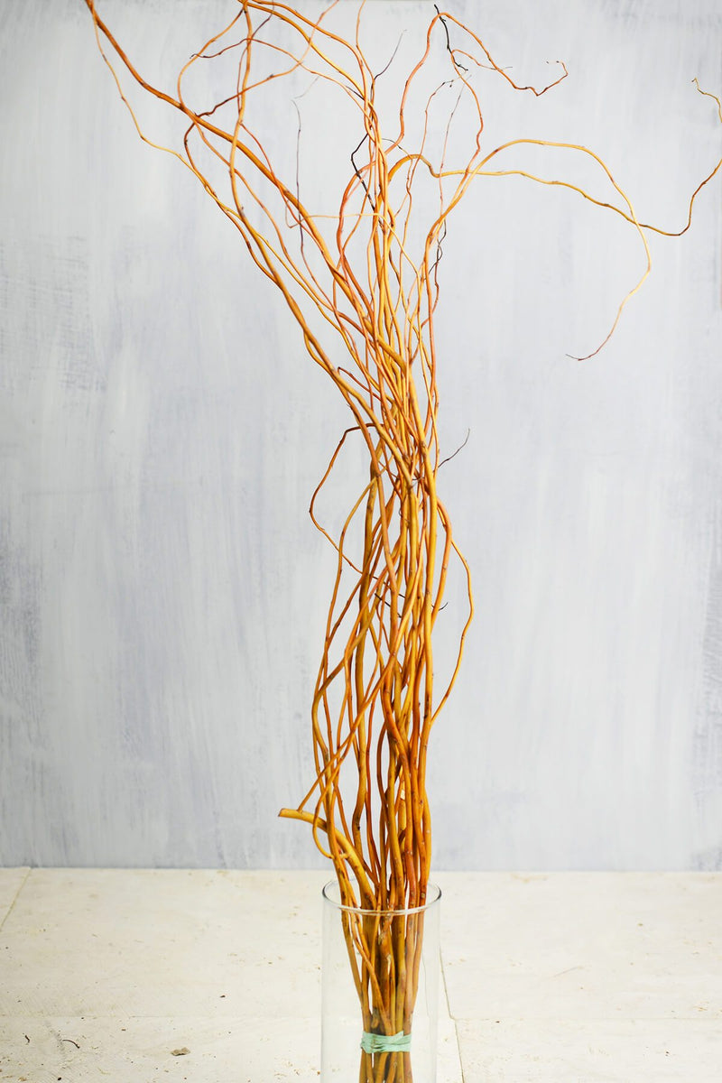 orange yellow curly willow branches 3 4ft
