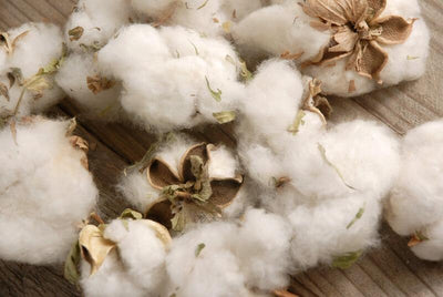 Natural Cotton Bolls (12 Bolls)