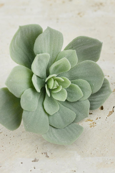 echeveria pick frosted green 7x4 5in