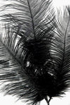 "3  Black 28"" Ostrich Feathers on Wires"