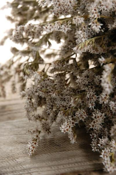 dried german statice flowers 13 x 8